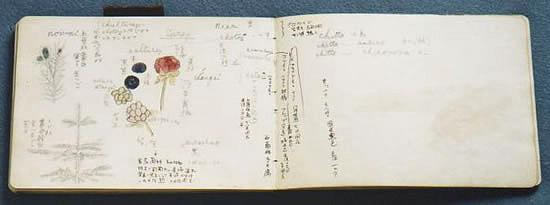 金田一京助展示資料「スケッチブック」